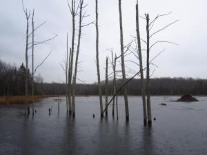Beavers 276
